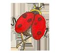 Pretty Red Ladybug